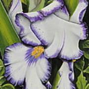 Mama's Favorite Iris Art Print