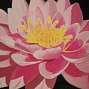 Mama's Lovely Lotus Art Print
