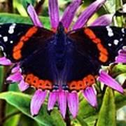 Mammoth Butterfly Art Print