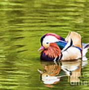 Mandarin Reflection Art Print