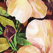 Mandevilla Art Print