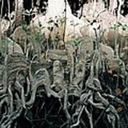 Mangrove Aerial Roots Art Print