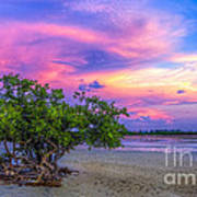 Mangrove By The Bay Art Print by Marvin Spates