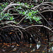 Mangrove Forest In Los Haitises National Park Dominican Republic Art Print