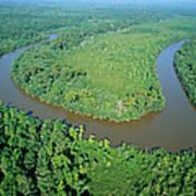 Mangrove Forest In Mahakam Delta Art Print