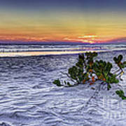 Mangrove On The Beach Art Print