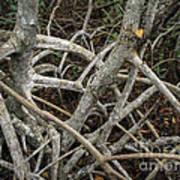 Mangrove Roots 1 Art Print