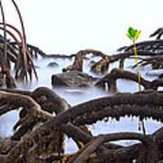 Mangrove Tree Roots Detail Art Print