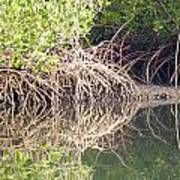 Mangroves In The Gambia Art Print