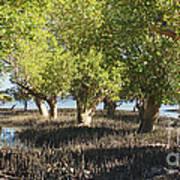 mangroves Madagascar 3 Art Print