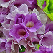 Mansoa Alliacea Art Print