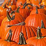 Many Pumpkins In A Row Art Prints Art Print