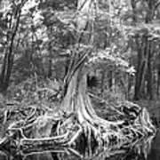 Many Roots Art Print