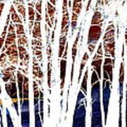 Many Trees Art Print