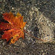 Maple Leaf - Playful Sunlight Patterns Art Print