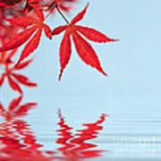 Maple Reflection Art Print