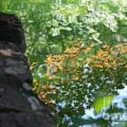 Maple Reflections Art Print