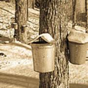 Maple Sap Buckets Art Print
