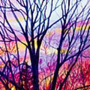 Maple Tree Sunset Art Print