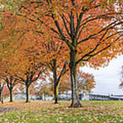 Maple Trees In Portland Downtown Park In Fall Art Print