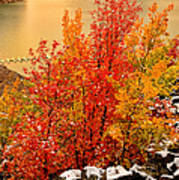 Maples Along The Palisades Art Print