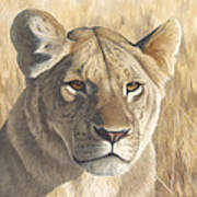 Mara Lioness Art Print