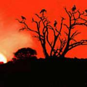 Marabou Tree Art Print