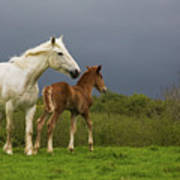 Mare And Foal, Co Derry, Ireland Art Print