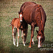 Mare With Foal Art Print