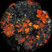 Marigold Fire Art Print
