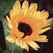 Marigold Impressions Art Print