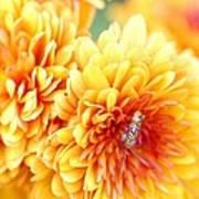Ailanthus Webworm Visits The Marigold  Art Print