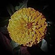 Marigold Digitized Art Print