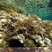 Marine Algae Print by Science Photo Library