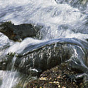 Marine Iguana Pair In Surf Galapagos Art Print