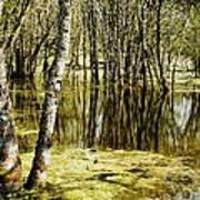 Marsh At Cheadle Lake Art Print