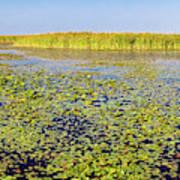 Marsh At Edge Of Lake Okeechobee Art Print