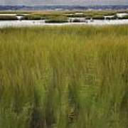 Marsh At Milford Point Art Print