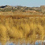 Marsh Lands In Wildlife Refuge Art Print