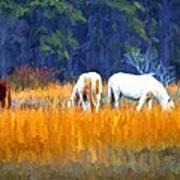 Marsh Ponies Art Print