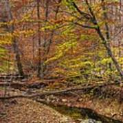 Maryland Country Roads - Autumn Colorfest No. 7 - Catoctin Mountains Frederick County Md Art Print