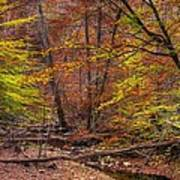 Maryland Country Roads - Autumn Colorfest No. 8 - Catoctin Mountains Frederick County Md Art Print