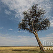 Masai Mara National Reserve Art Print