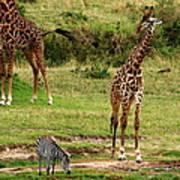 Masai Mara Wildlife Scene Art Print