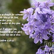Matthew 6 Verses 28 And 29 Art Print