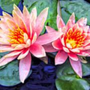 Maui Lotus Blossoms Art Print