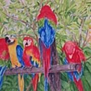 Maui Macaws Art Print