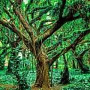 Maui Tree Art Print