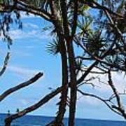 Maui Tree Silhouette Art Print