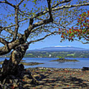 Mauna Kea Volcano Over Hilo Bay Hawaii Art Print by Daniel Hagerman